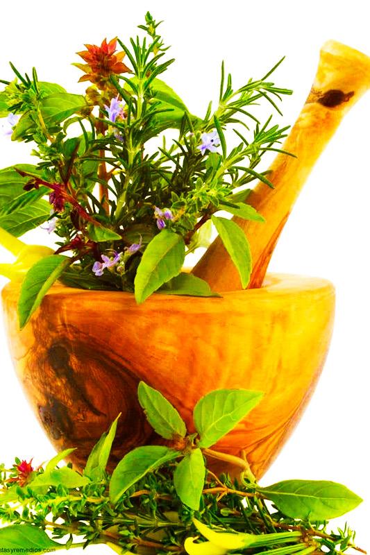 Curso Online de Introducción a las Plantas Medicinales