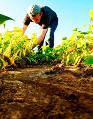 Curso Online de Prevención de Riesgos Laborales para el Sector Agrario