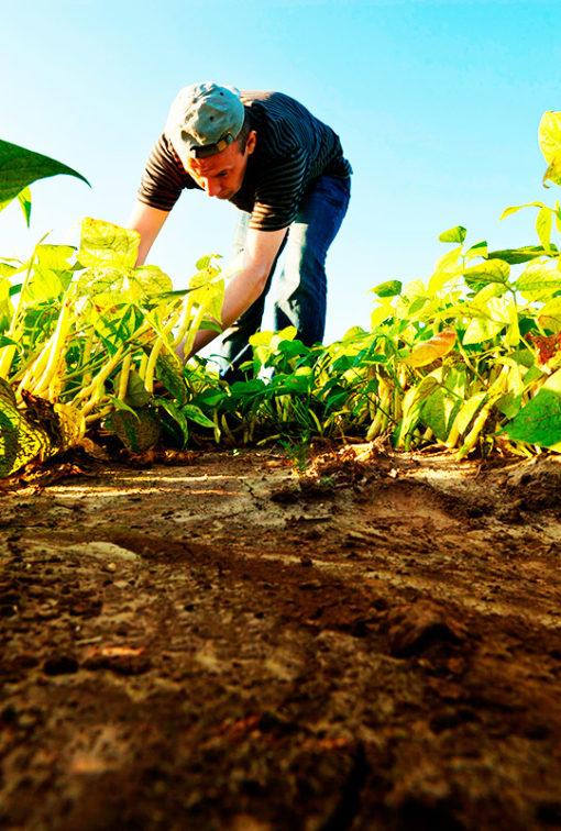 Prevención de Riesgos Laborales para el Sector Agrario