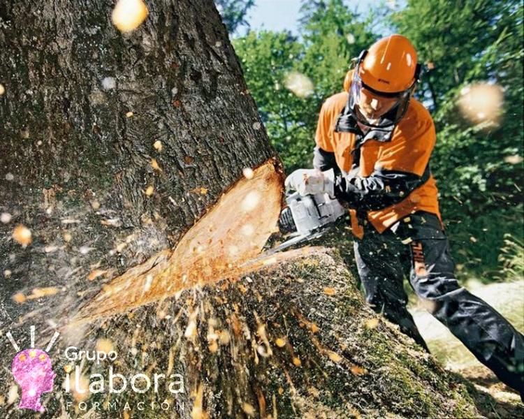 prevención de riesgos laborales - prl sector forestal - Prevención de Riesgos Laborales para el Sector Forestal