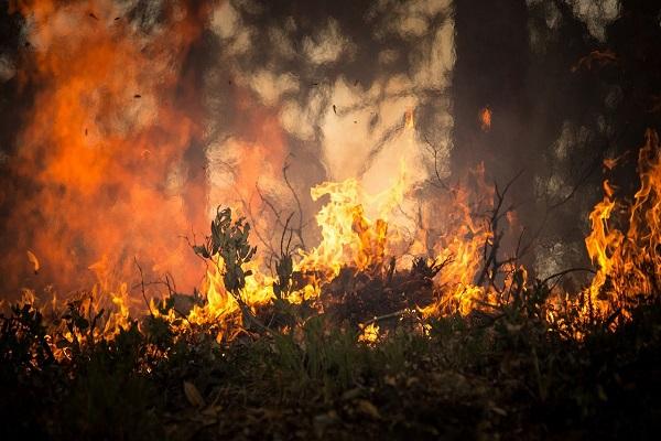Formación en incendios forestales