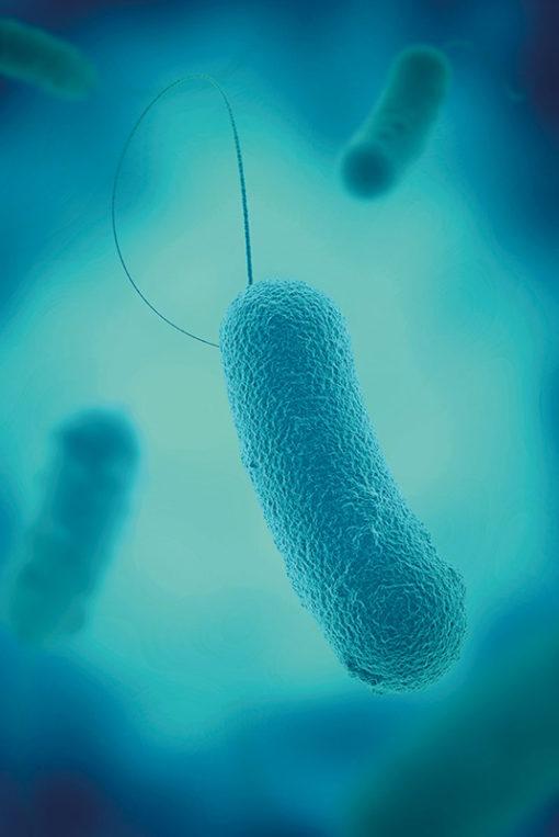 Curso Online de Legionella: Prevención, Control y Mantenimiento de Instalaciones