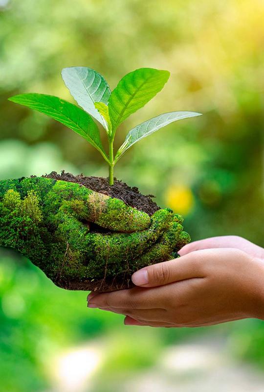Sensibilização Ambiental