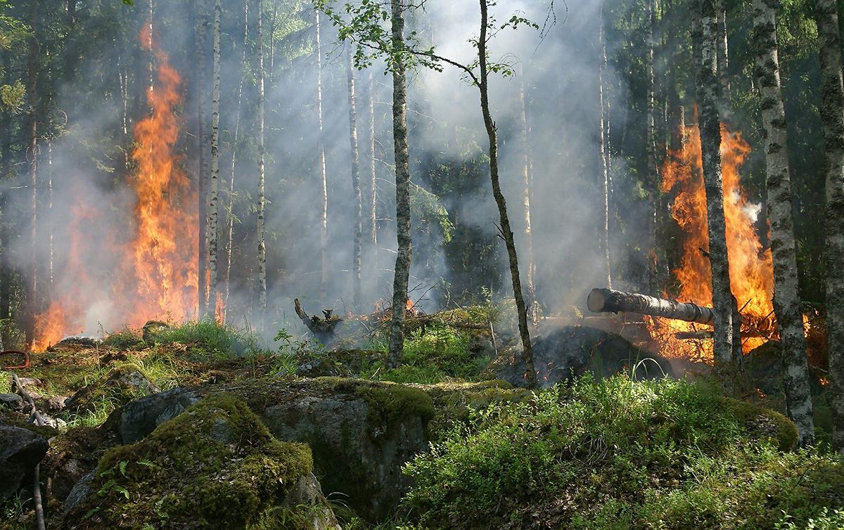 La prevención en los incendios forestales