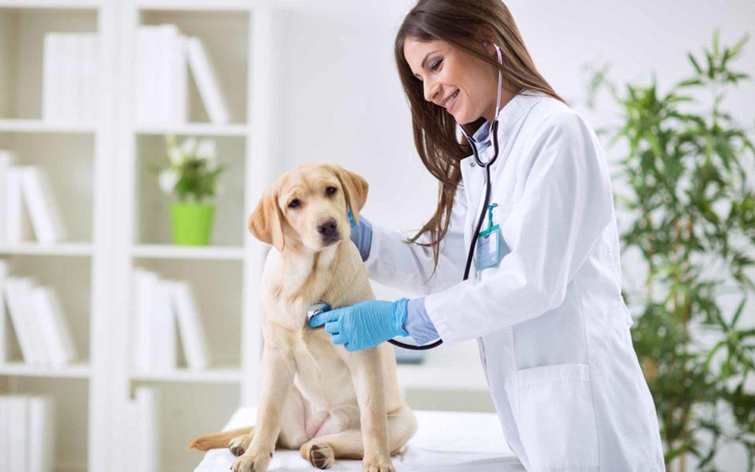 empresas - veterinaria - Escuelas iLabora